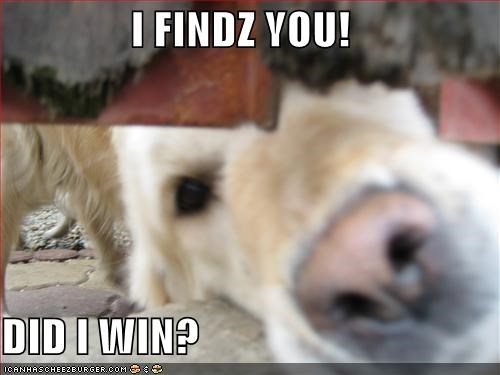 golden retriever hide and seek hiding nose win - 1890296576