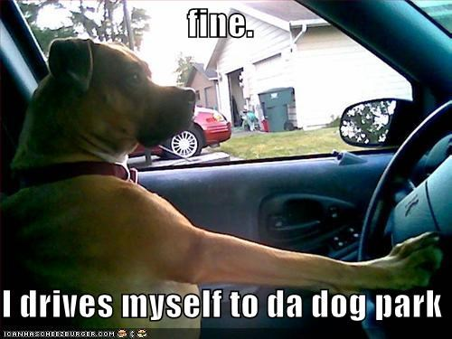 boxer cars dog park driving - 1892985600