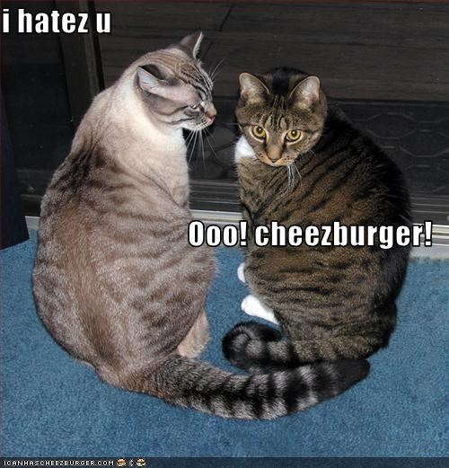 Cheezburger Image 1893244160