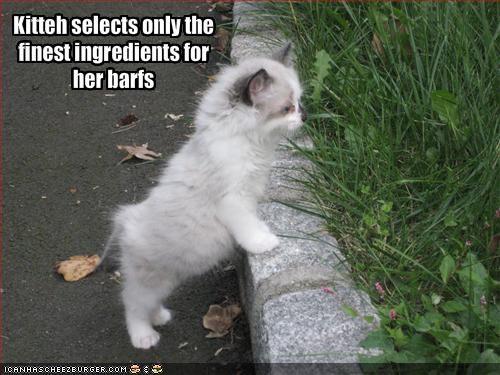 barf cute grass kitten nom nom nom outside - 1893610240