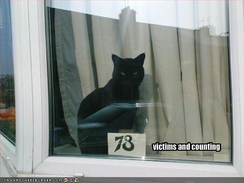 basement cat evil murder windows - 1895441664