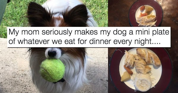 dogs dinner food papillon - 1895685