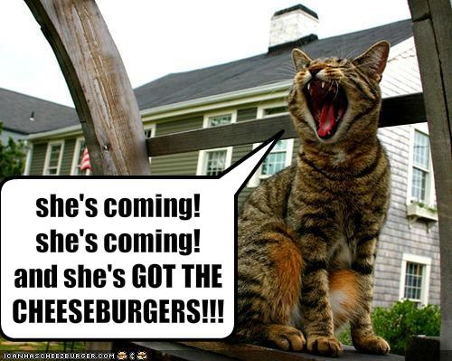 cheezburger excited hungry yelling - 1896963328
