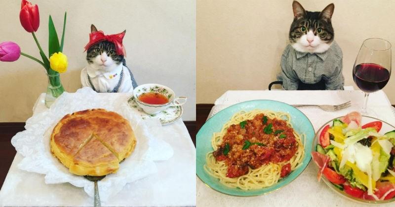 dinner food Cats - 1897477