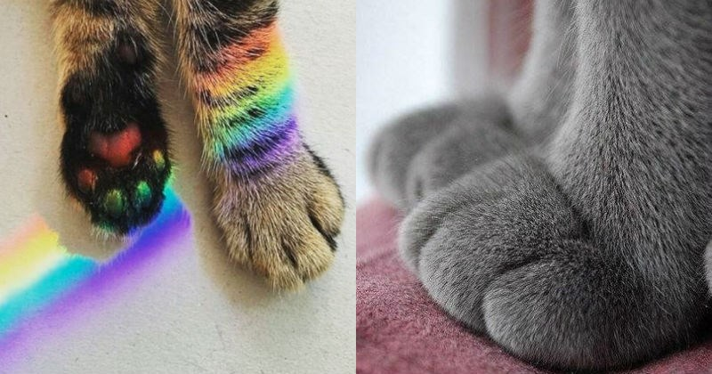 cute little cat paws that are deliciously adorable | rainbow toe beans | fluffy fuzzy grey kitty paws