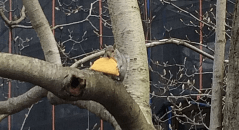 Squirrel Spotted Munchin' On Taco Just Won 2017