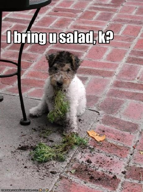 destruction,FAIL,food,plants,salad,schnauzer,vegetables