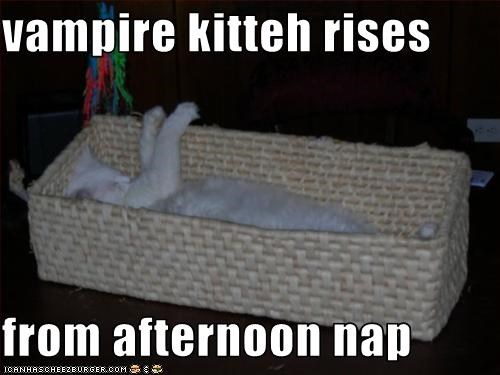 cute,kitten,nap,vampire