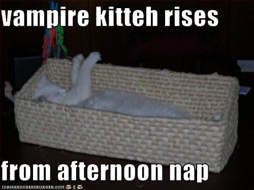cute kitten nap vampire - 1902125824