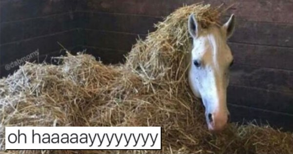 Cute and Funny Animal Memes including dogs, cats, goats, deer and horses