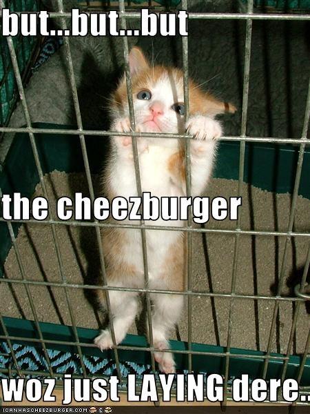 Cheezburger Image 1902801152
