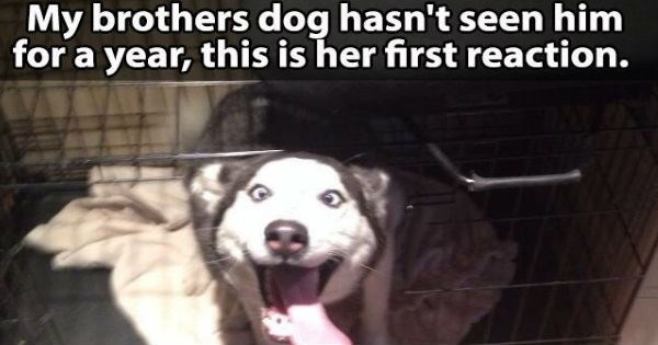 excited dog greeting owner after missing him for a year