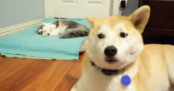 cute fun pictures of cats that have stolen the bed from the dog