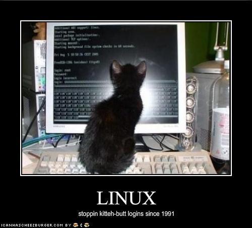computer cute kitten linux - 1906272512