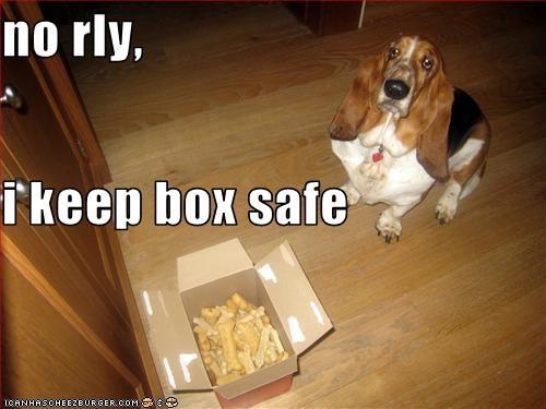 basset hound,bones,fat,guard dog,old,treat