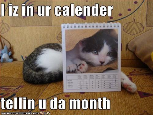 cute kitten - 1913109248
