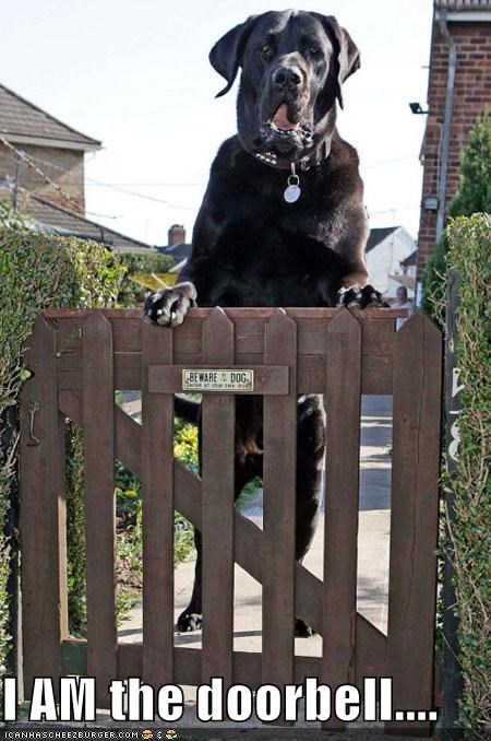 beware of dog doorbell fence gate neopolitan mastiff - 1915083008