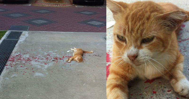 Funny cat trolls person to look like injured cat, gets adopted.