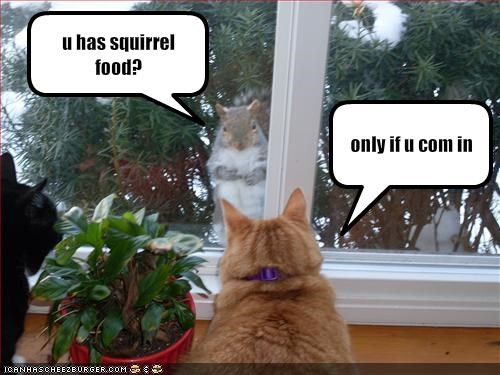 fud,lolsquirrels,murder,plotting
