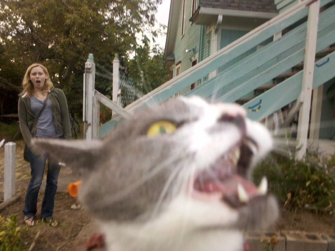Hilarious collection of funny photos that illustrate just how much cats are the king of photobombing.