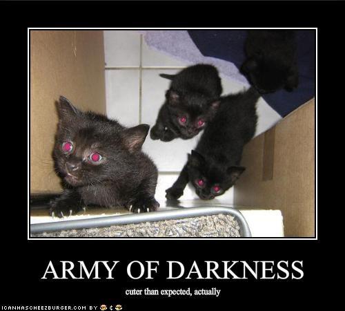 basement cat cute kitten - 1922798848