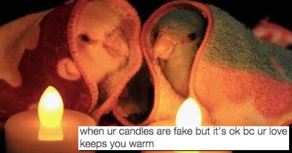 wholesome memes that will foster growth and personal values