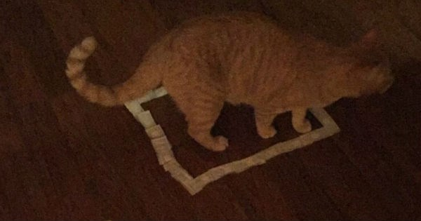 Funny pics of how to trap a cat by making an area for which they jump into with just about any material.