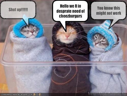 Cheezburger Image 1930278656