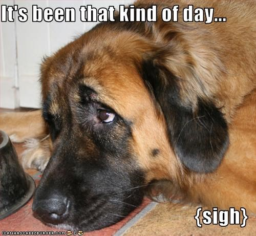 Sad tired whatbreed - 1932884736