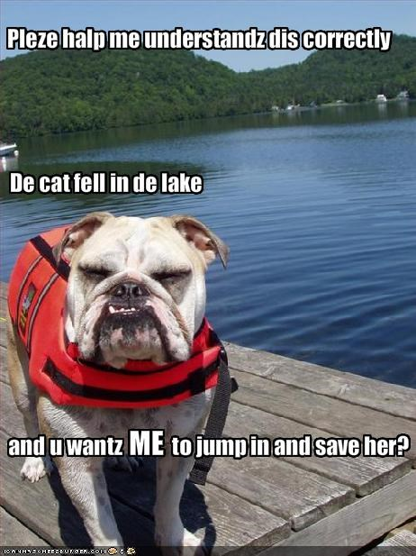 bulldog lolcats rescue save swimming - 1934692608