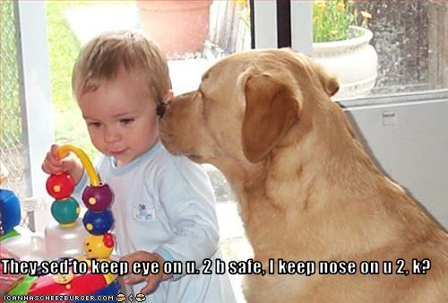 baby babysitting eyes golden retriever guard dog human - 1935721216