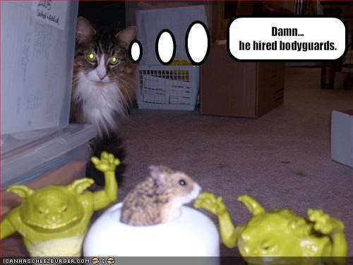 lolhamsters,security system