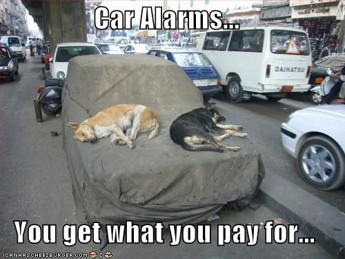 alarms cars german shepherd guard dog sleeping whatbreed - 1937903360