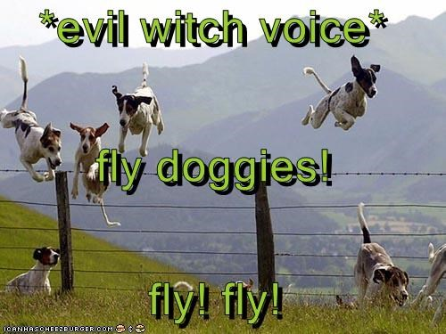 evil witch voice* fly doggies! fly! fly! - Cheezburger