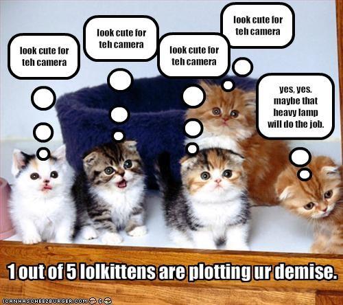camera cute kitten murder plotting - 1939835136