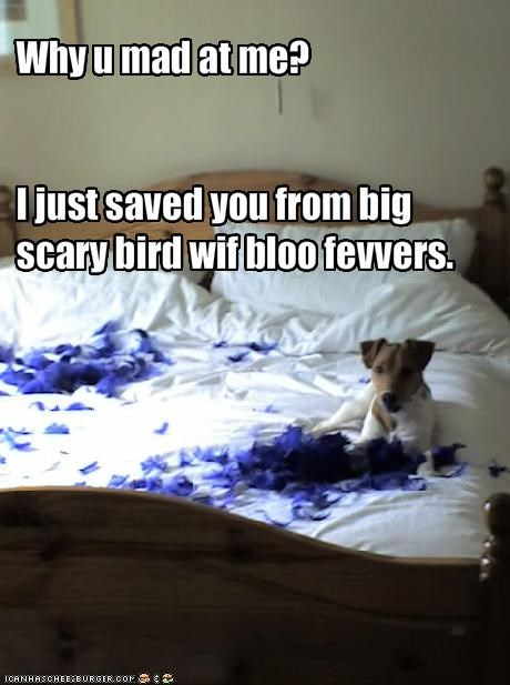 bad dog,bed,bird,destruction,FAIL,feathers,jack russel terrier,mad,mess