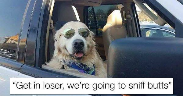 Memes lol funny animals - 1943045