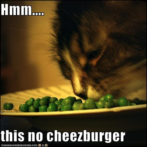 Cheezburger Image 1944294144