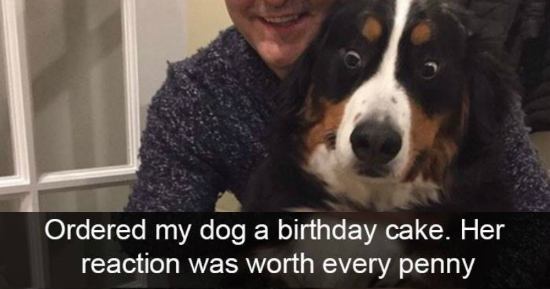 Picture of dog reacting surprised and text saying it is a birthday cake that caused this reaction.