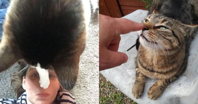 pets boop nose Cats - 1945605