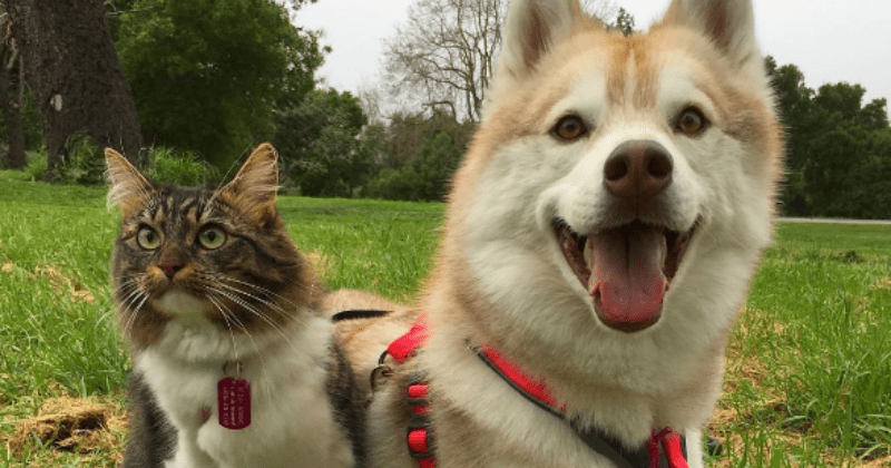dogs list cute Cats