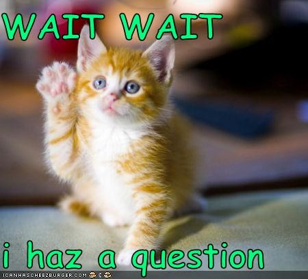 WAIT WAIT i haz a question - Cheezburger - Funny Memes | Funny Pictures