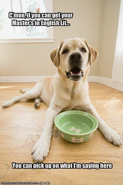 bowl,educated,empty,feed me,labrador,yellow lab