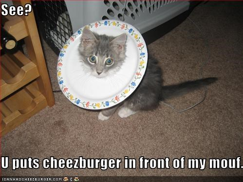 Cheezburger Image 1947874560