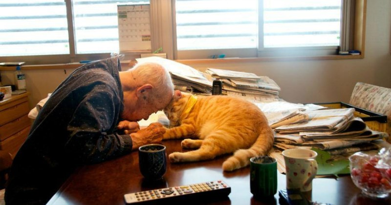 photos of a cat and grandpa that are full of awww