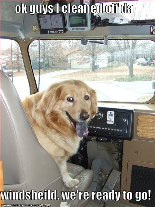 bus,clean,golden retriever,licking,tongue,truck,van,windows