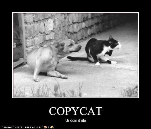 copycat impostor lolcats scratch whatbreed - 1948911360