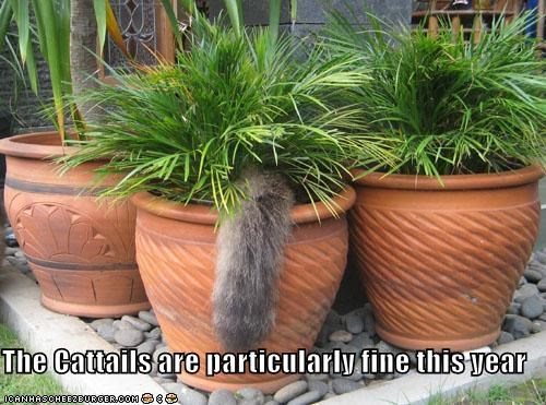 outside plants tail - 1949256960