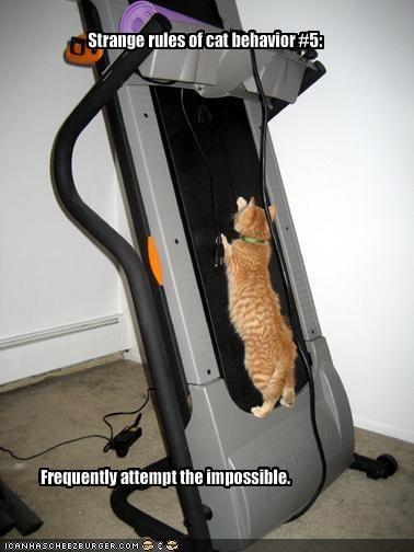 excercise rules strange treadmill - 1950140160
