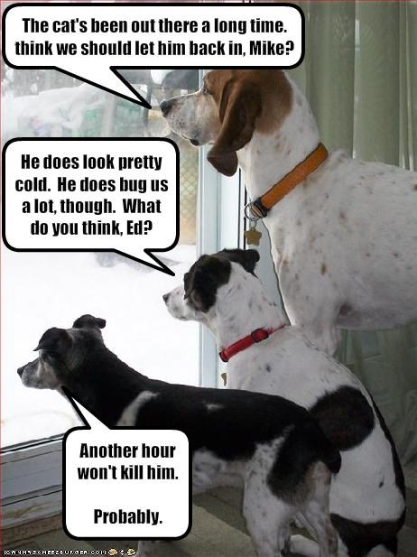 cold in or out lolcats outside whatbreed - 1952665856